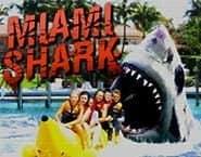 Tubarão de Miami